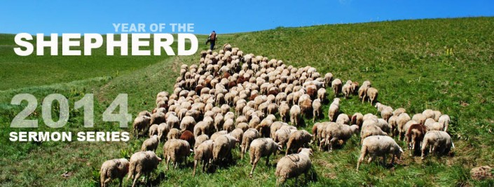 Year of Shepherd header